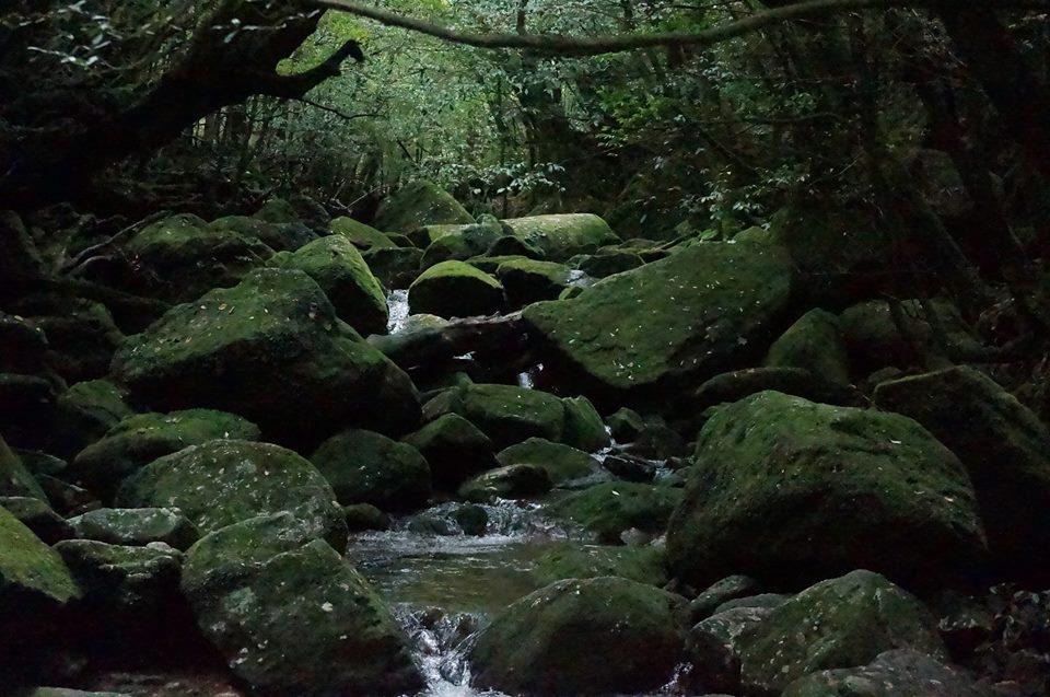 苔むす森の景色