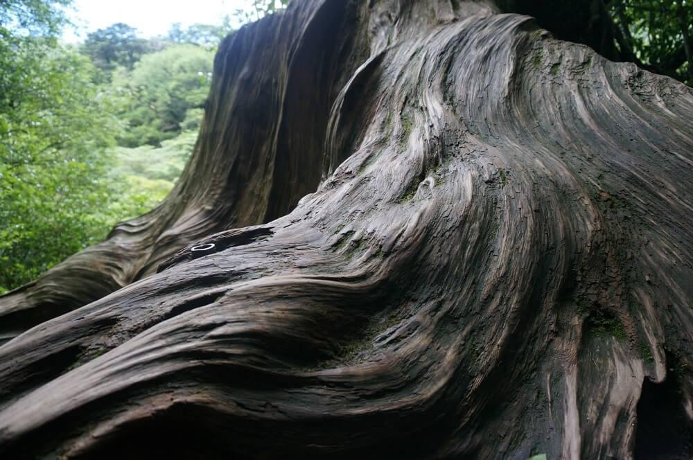 苔むす森で出会った切り株